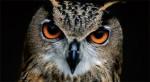 owl totem